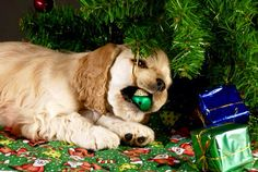 Christmas puppy tastes of decorations