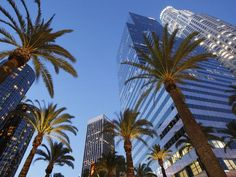 Iconic Palm Trees in downtown LA California Dreamin', Los Angeles California, Los Angeles Hollywood, Los Angeles Usa, City Of Angels, Future Travel, City Streets, National Geographic, Around The Worlds