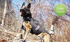 Groupon - $10 Donation to Help Fund Bulletproof Vests for Police Dogs in On Location. Groupon deal price: $10.0.00