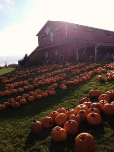 Pumpkins in Michigan