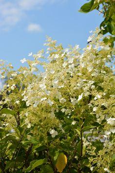 Enjoying what's left of summer! #flowers #RobertRothschildFarm