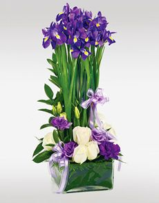 No matter what the occasion, find the perfect gift from NetFlorist's extensive range of gifting ideas. Easter Flowers, Mothers Day Flowers, Deco Floral, Floral Design, Art Floral, Flowers Singapore, Order Flowers Online, Purple Iris, Amazing Flowers