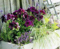 Zum Nachmachen: Balkonkasten mit Federbusch, Lavendel und Edelgeranien - [LIVING AT HOME]