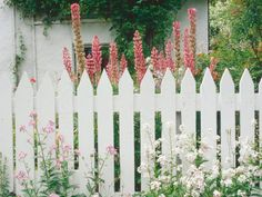 Picket fences are a good choice for a backdrop, especially in an English garden.