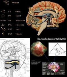 sacred geometry ratios and pineal gland More information: Join us on Tsu! The…