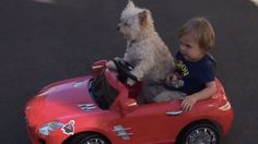 Driving dog and little boy are the most adorable motorheads on the road