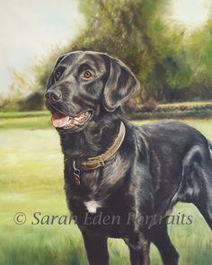 'Bertie', oil painting of a black Labrador by Sarah Eden #labrador #blacklabrador