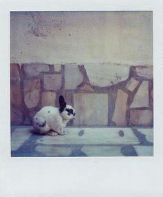 Polaroid by Pato Hernan (Flickr)