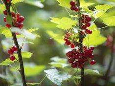 Gardening, Fruit, Lawn And Garden, Horticulture