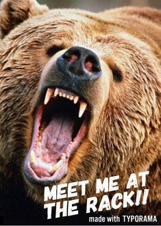 bear attack | angry bear resources | Pinterest | Bear ...