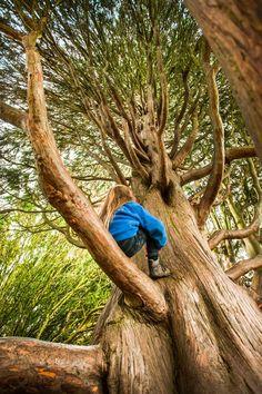 "#50things No. 1 ""Climb a tree"""