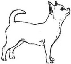Easy Drawings of Chihuahua - Bing Images