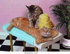 Cats like massages too! Check out our different human massages at www.thermae.com