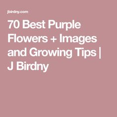 70 Best Purple Flowers + Images and Growing Tips | J Birdny
