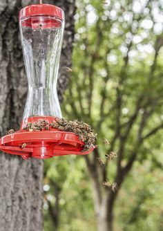 Tips for keeping bees away from Hummingbird feeders!