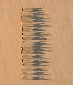 Birds Eye View The shadows of the camels is what makes this such an incredible shot - camel ride by jarrad seng
