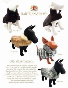 Fur Coats For the Wealthiest Pups for Winter Comfort