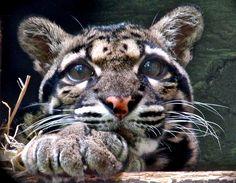 The Animal Blog