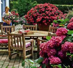 Deck landscaping with hydrangeas.