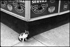Leonard Freed, New York, 1956