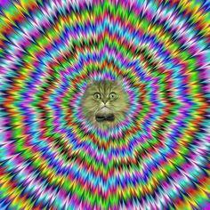 tripped cat