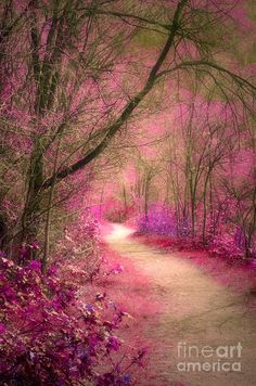 Trail Photograph - The Pink Boulevard by Tara Turner Beautiful Landscape Wallpaper, Beautiful Nature Wallpaper, Scenery Wallpaper, Beautiful Landscapes, Wallpaper Backgrounds, Landscape Art, Landscape Photography, Nature Photography, Beautiful Nature Pictures