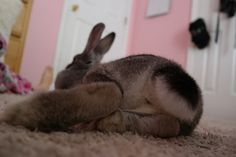 Bunny Bum close up! Bunny Foo Foo said it was too close!