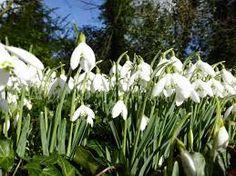 Image result for site:hoptonhall.co.uk hopton hall