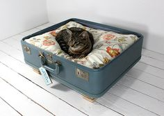 Pet beds out of old suitcases. So cute.