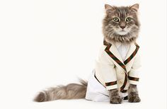 cats + clothes