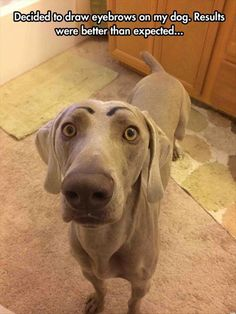 Funny Dogs - Eyebrows On A Dog (302 Pics)