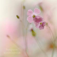 Roze bloemen. Pastel. Fine art print van de door BeatriceLechtanski