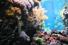 undersea flora