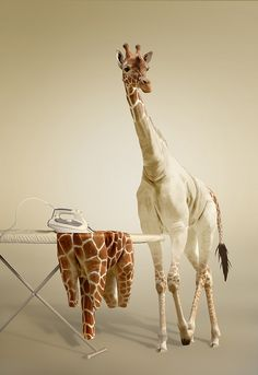 undressed giraffe
