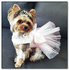 dog wedding reading Girl Dog Clothes, Cute Dog Clothes, Yorkie Clothes, Dog Wedding Dress, Dog Tutu, Dog Clothes Patterns, Yorkshire Terrier Dog, Yorkie Puppy, Dog Dresses