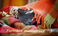Высказывания народный костюм п д пономарева