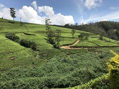 Sri Lanka: tea plantations
