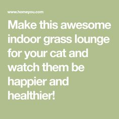 Make this awesome indoor grass lounge for your cat and watch them be happier and healthier!