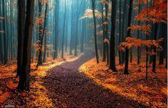 Pour leurs arbres géants, leurs fleurs de toutes les couleurs ou leurs chemins enchantés, ces forêts uniques au monde sont mystérieuses...