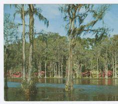 Greenfield Park, Wilmington, N.C. :: North Carolina Postcards