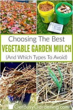 Deciding What Kind Of Mulch Is Best For A Vegetable Garden Doesn T Have To Be Intimidating Just Avo With Images Mulch For Vegetable Garden Garden Mulch Growing Vegetables