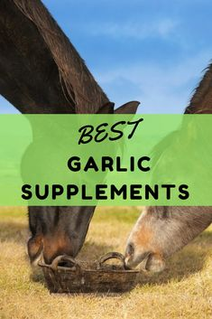 Looking for the best garlic supplement for horses on the market in Here are 3 top rated garlic supplements for horses that you can buy online today. Garlic Supplements, Horse Feed, Heart Health, Cleanses, Health Benefits, Wealth, Blood, Good Things, Horses