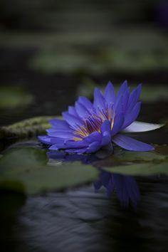 "500px / Photo ""blue"" by Hideaki Yoshida"