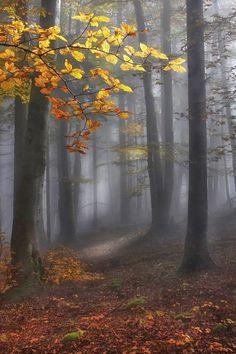 bosque mitico
