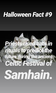 Halloween Halloween Fun Facts, Halloween Treats, Halloween Decorations, Halloween House, Halloween Night, Black Cat Adoption, Celtic Festival, A Child Is Born, Walt Disney Pictures