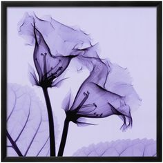 Purple wall art is delightful, Art.com Gloxina Framed Wall Art