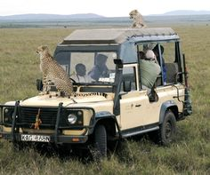 An African Safari would be such a fun Friend-iversary Celebration! And that would be me-snapping a picture of an animal behind me and missing the one on my hood!