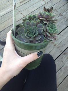 - ̗̀ plants are friends ̖́- Cacti And Succulents, Planting Succulents, Planting Flowers, Cactus Plante, Carnivore, Plants Are Friends, Plant Aesthetic, Bloom Where You Are Planted, Little Plants