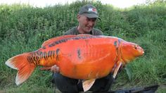 Fishing Times, Fishing 101, Carp Fishing, Salt And Water, Fresh Water, Aquariums, Fish Chart, Mind Relaxation, Carpe