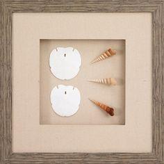 Shells in shadow box!!!